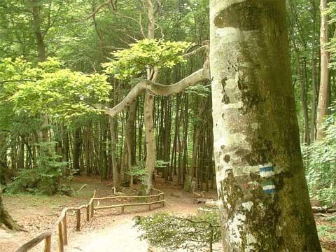 buchenwald-jasmund