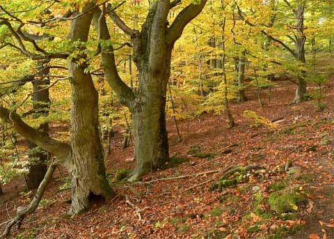 buchenwald-kellerwald