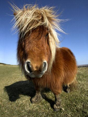 facebook-one-trick-pony