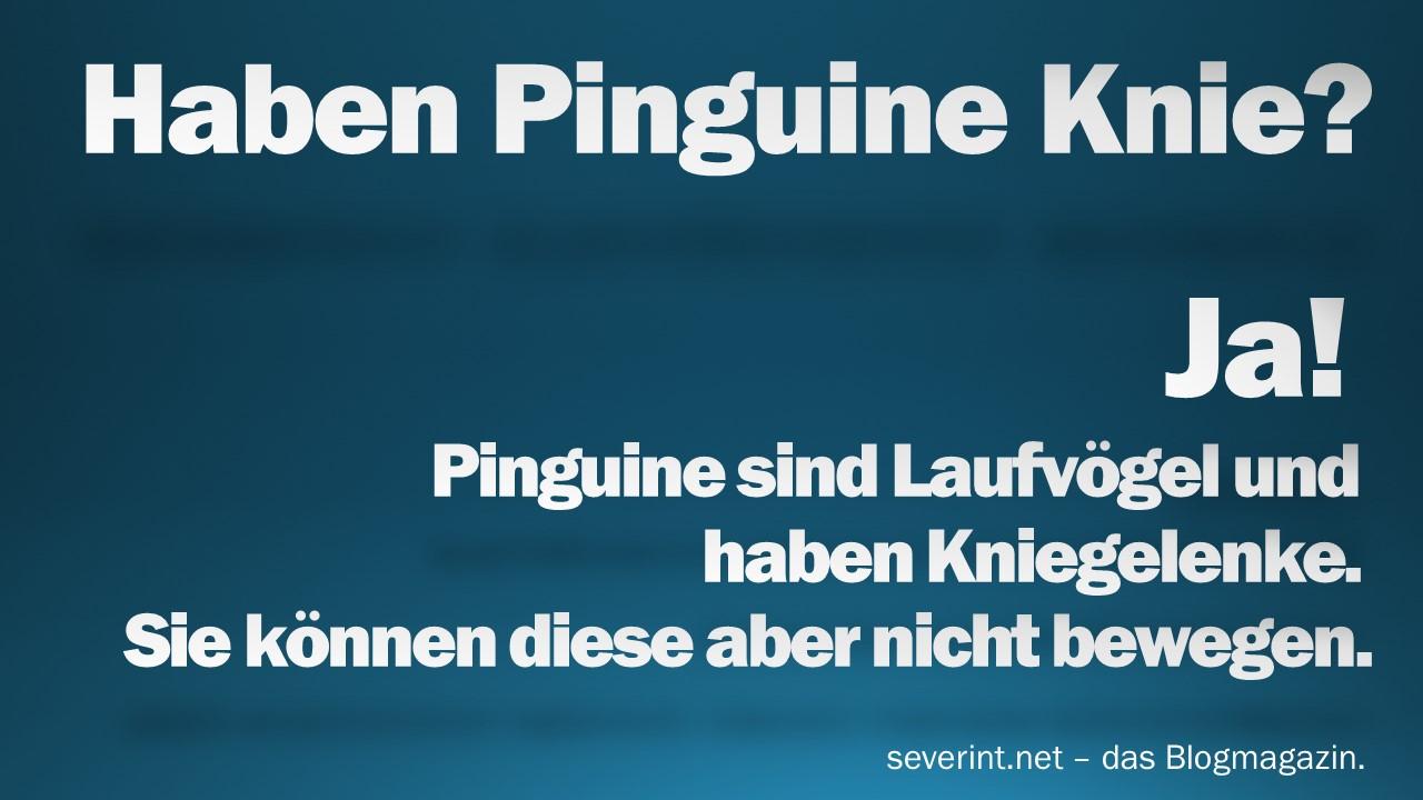 haben-pinguine-knie